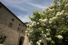 Blooming trees in the court yard of Castello di Montegiove in Umbria near Orvieto
